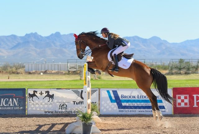 Must Have Horse Jumping Training Items